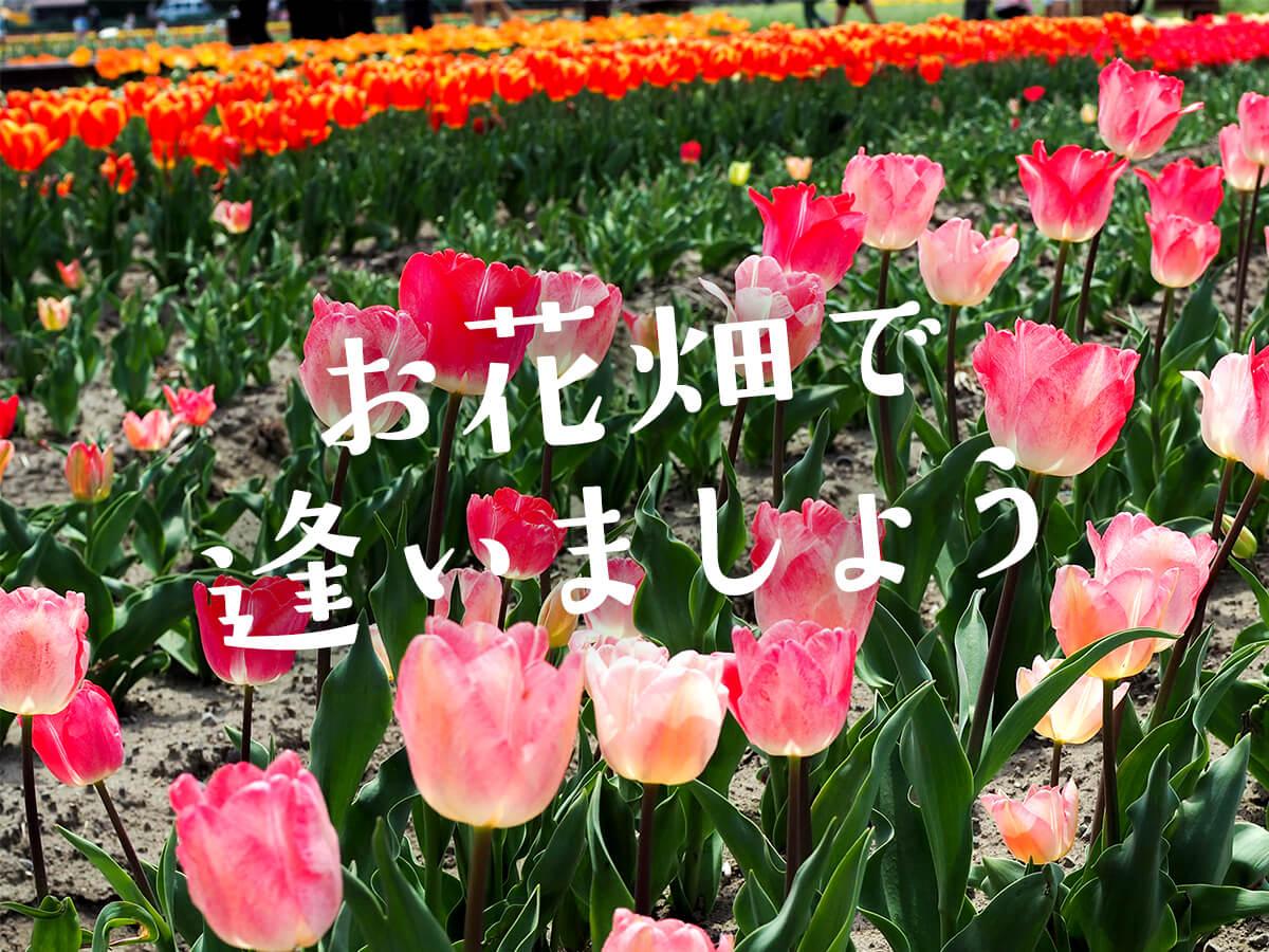 波風と花畑