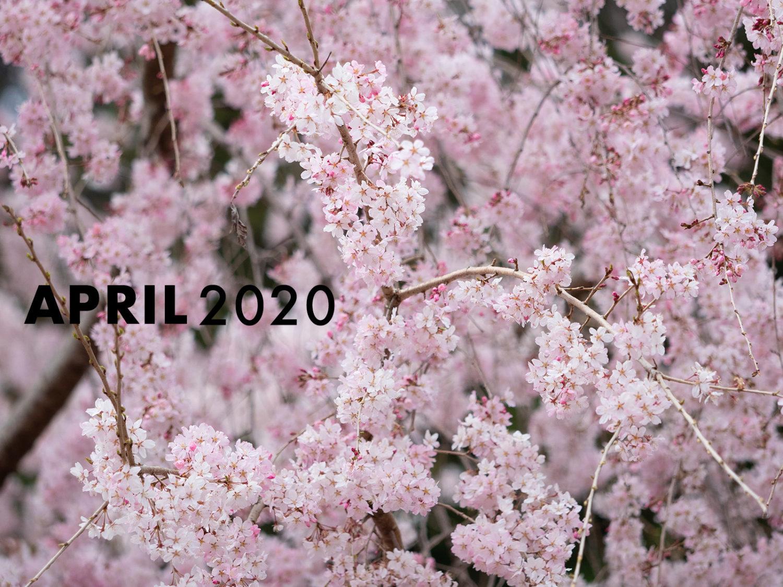 2020年4月のニュース